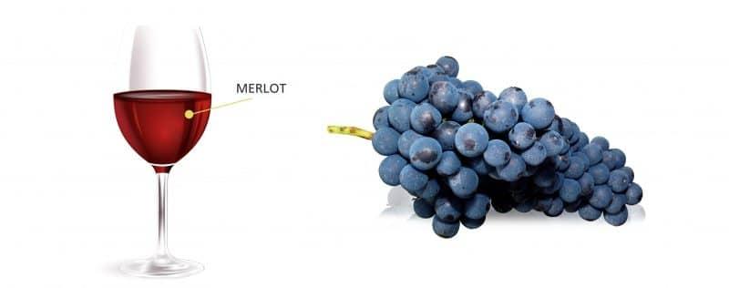 Merlot Trauben und Merlot im Weinglas